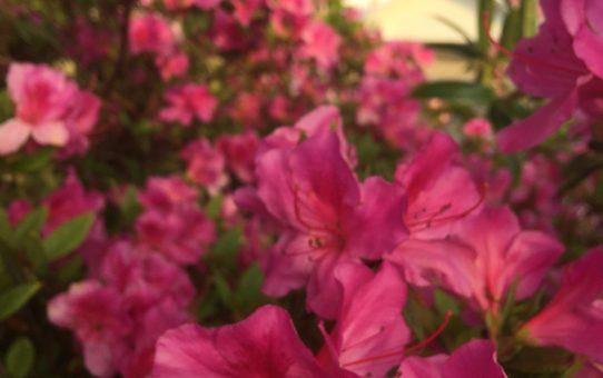 花の上五島